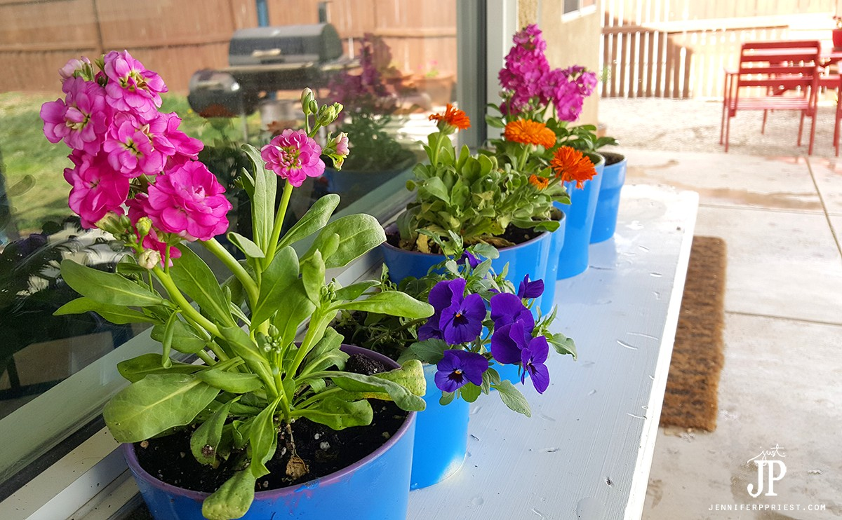 Painted-Flower-Pots-with-NEW-Spring-Flowers-Jenniferppriest