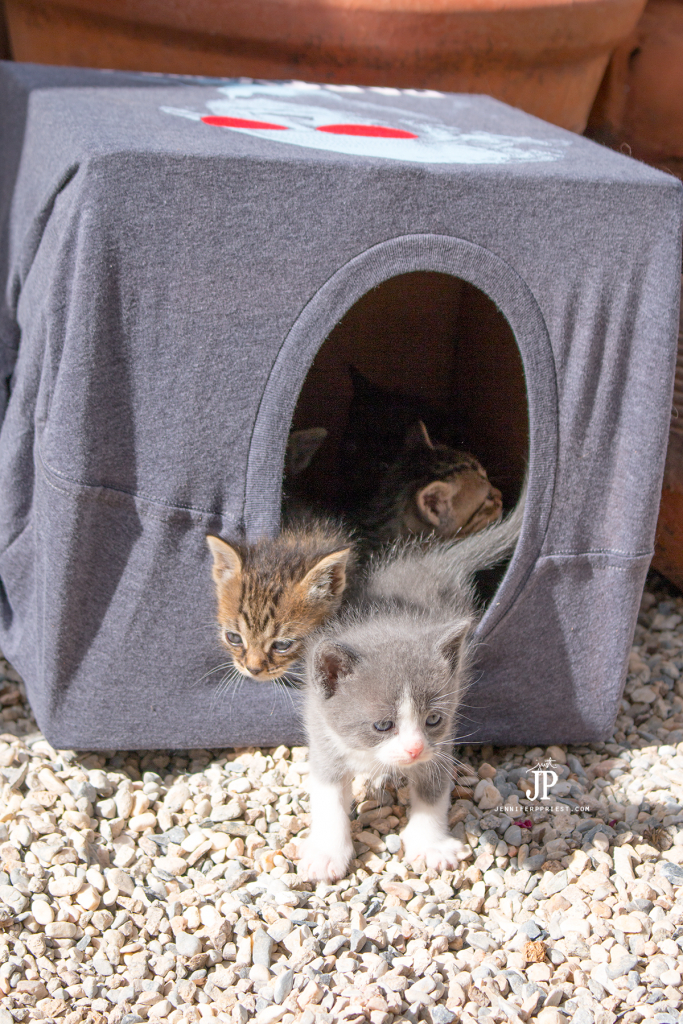 How to make a cheap diy cat house plus save the kitties for Make a cat bed out of a box