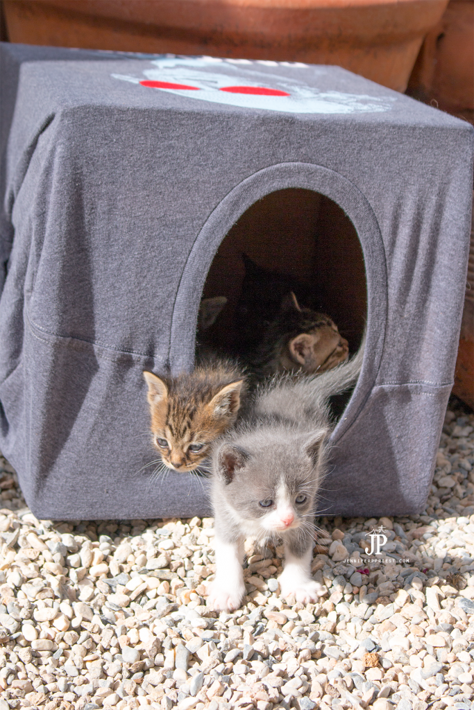 Make Cat House Out Cardboard Box And Shirt
