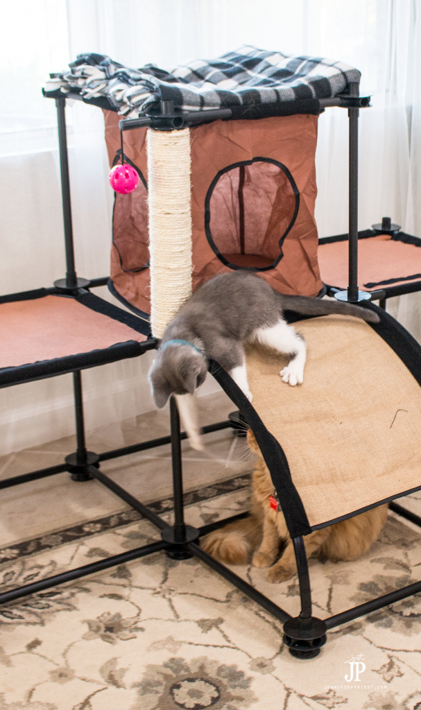 Tubbs-and-Adventure-Kitty-playing-jenniferppriest-2