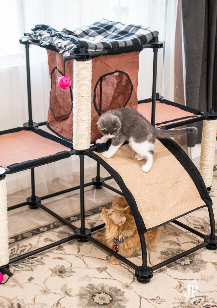 Tubbs-and-Adventure-Kitty-playing-jenniferppriest