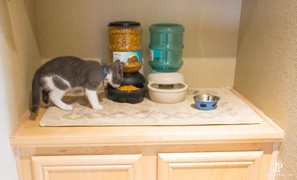 Set-up-a-Cat-Food-Station