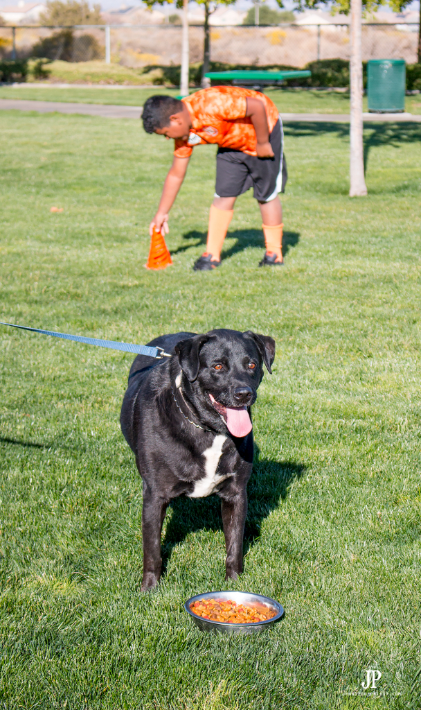 give-dog-snack-break-when-playing-soccer-with-your-dog-purina-beneful-jenniferppriest