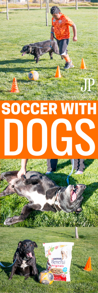 #Appetites4Life #AD Get active with your adventurous dog by playing soccer. 5 tips for making the most of your soccer sesh with @Purina Beneful Originals with Real Beef from @Target.